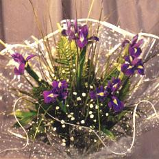 Floral online shop - iris bouquet with delivery in Ukraine > Send iris in ,  Ukraine