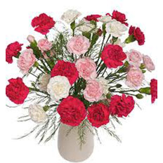 Order carnations online | Send carnations to ,  Ukraine.