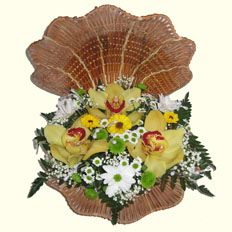 Send Orchid to Kiev | Flowers delivery Ukraine.