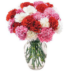 Same day delivery Carnation all over Ukraine | Couriers and Florists
