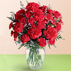 Bright Carnations, Red Carnations