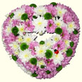 K: Chrysanthemum Heart