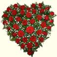 К: Сердце (39 роз)