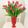 Gentle Pink Tulips